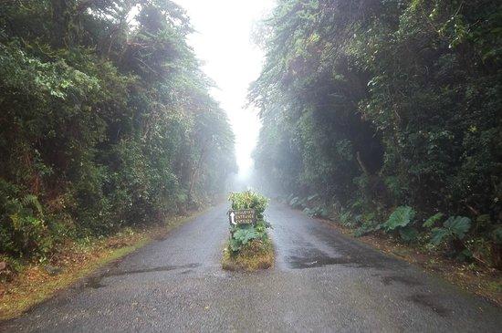 Poas Volcano:                   blvd. de entrada a cráter