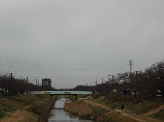 Sanagawa Embankment:                   冬の佐奈川堤