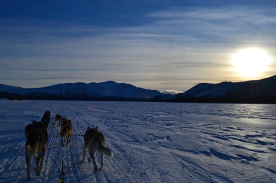 Whitehorse, Kanada:                   Dog sledding on Fish Lake