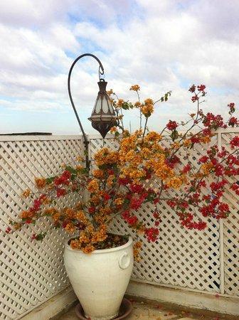Riad Moullaoud :                   Terrasse