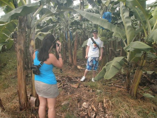 Paradise Excursions: banana plantation