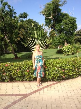 Luxury Bahia Principe Cayo Levantado:                                     trees grow out of your back here