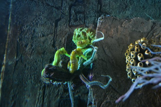 National Sea Life Centre: sea horses