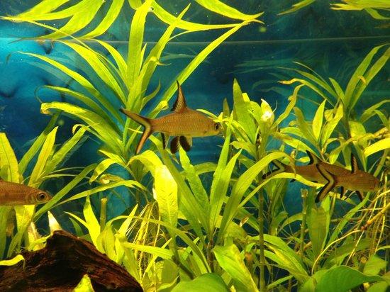 Tikuji-ni-wadi: Aquarium