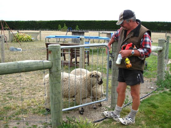 Pete's Farm Stay B&B:                                     Feeding the sheeps!