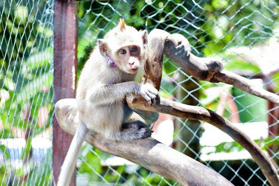 Santa Mandala Artist Homestay:                   monkey