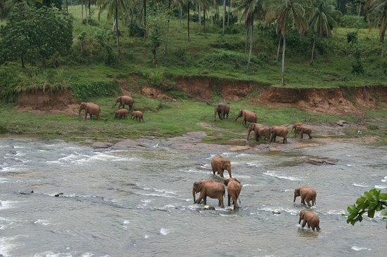 Hotel Elephant Park: The hotel is located direct at the river where the elephants have their bath twice a day