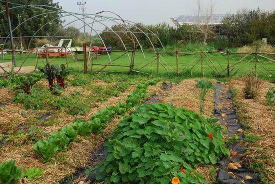 Yarok Az Organic Goat Farm:                   Farm outside the Ecodome