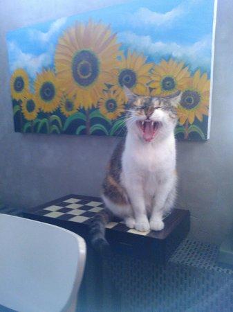 Peradays:                   yawning cat!