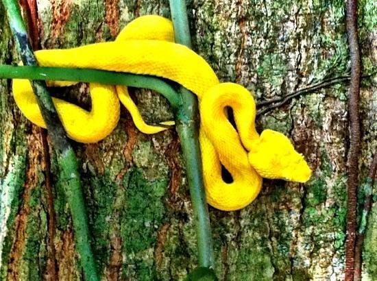 Bucus Tours:                   eyelash viper