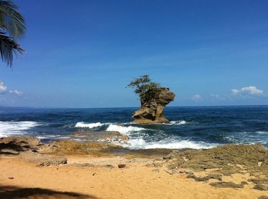 Bucus Tours:                   coastline