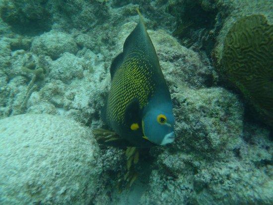 Grand Sirenis Riviera Maya Resort & Spa:                   the snorkeling at the resort                 