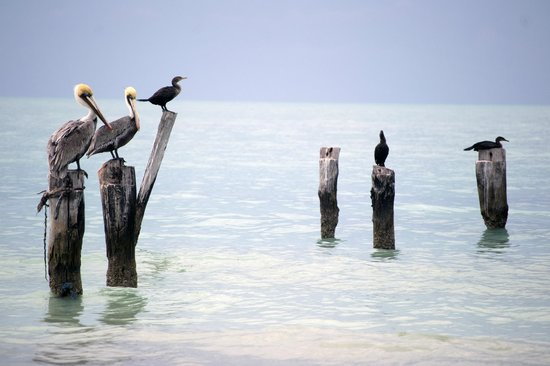 Holbox Dream Beach Front Hotel by Xperience Hotels: Birdwatching at Holbox