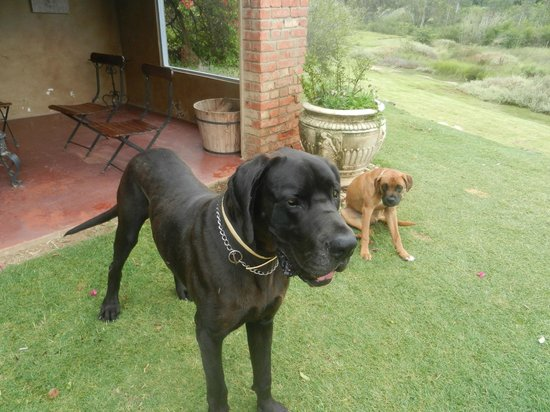 Gerald's Gift Guest House :                   Jack & George, the sweet family dogs :-)