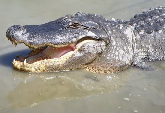 Gator Pits and Cocktail Cruises: getlstd_property_photo