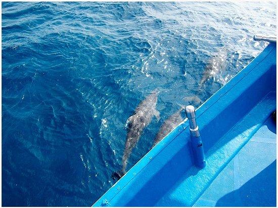 Park Hyatt Maldives Hadahaa: dolphins