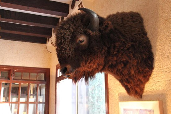 The Hotel Paisano:                   Buffalo in lobby