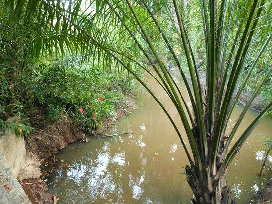 ซันดา รีสอร์ท:                   River