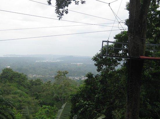 The Jungle Breeze:                   view of a platform