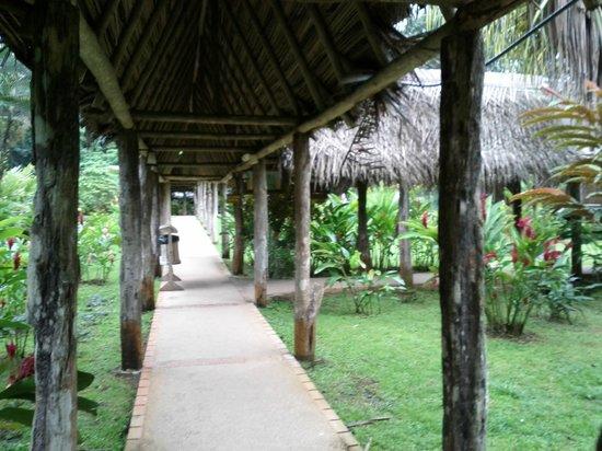 Hotel Hacienda Sueno Azul:                   pasillos