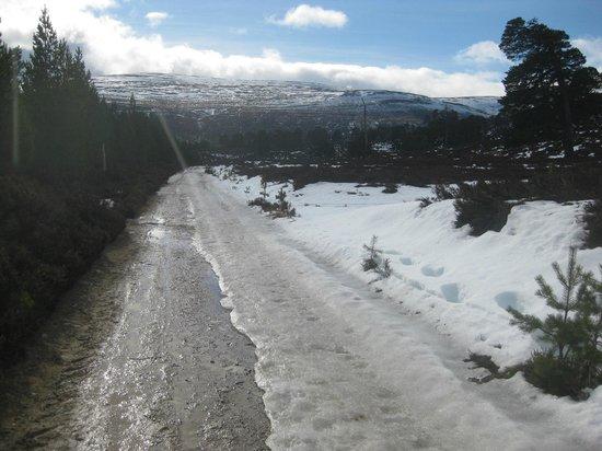 Mar Lodge Estate:                                     Glen Lui trail still icy in parts