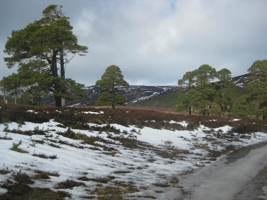 Mar Lodge Estate:                                     Glen Lui walk