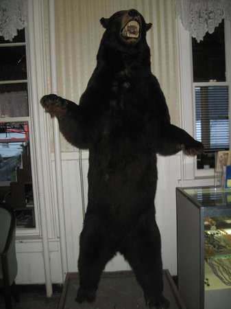 Long Lake, NY:                                     bear at hotel/restaurant we ate at