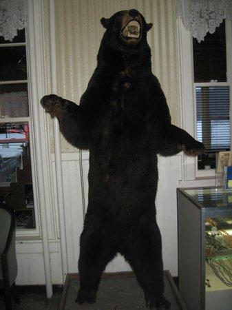 Adirondack Hotel:                                     bear at hotel/restaurant we ate at