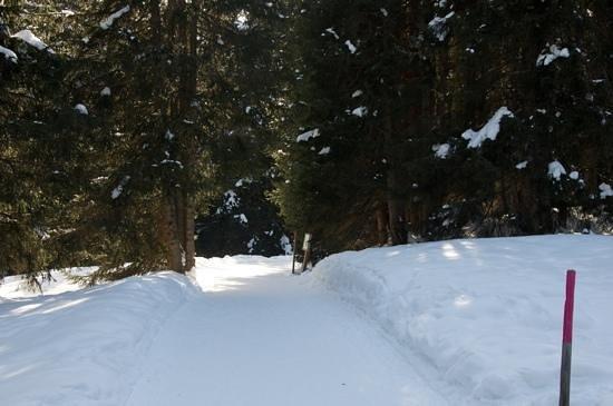 Arosa Ski Resort:                   Arosa : le sentier des écureuils