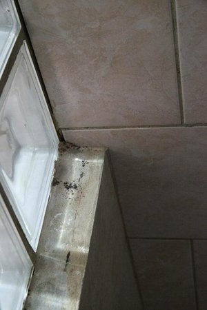 Eden Beach Resort:                   Mold in shower
