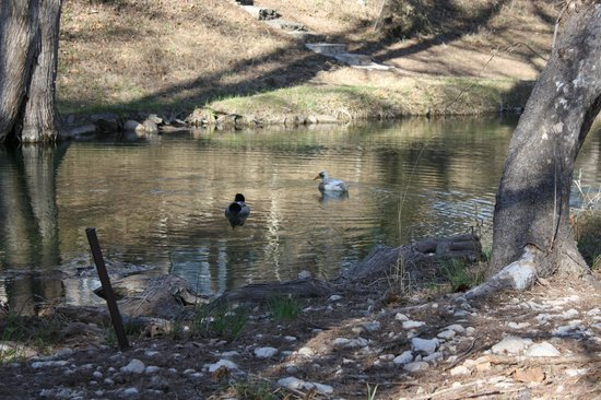 Cypress Creek Cottages:                   Ducks at the Creek