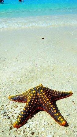 Zanzibar Archipel, Tanzania:                   stella