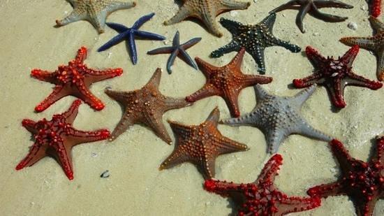Zanzibar Archipel, Tanzania:                   stelle
