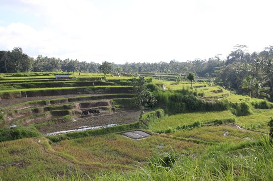 Villa Semana:                   Rice!!!