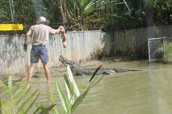 Hartley's Crocodile Adventures照片