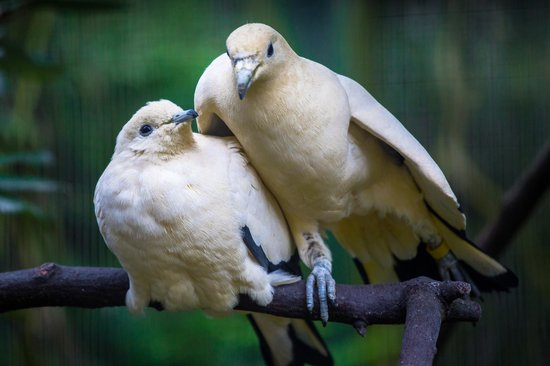 Birdworld:                   Beautiful Pigeons