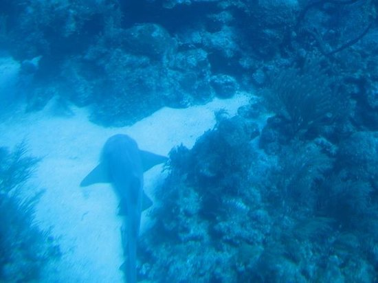 Atlantis Submarines: one of the sharks that we saw on our trip