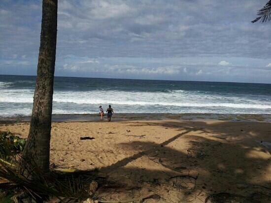 Kikita Beach Guest House Bar y Grill :                   kikita Beach Dorado