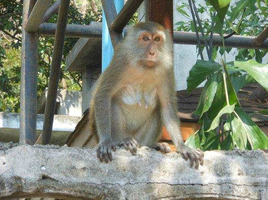 Railay Princess Resort and Spa:                                     monkeys