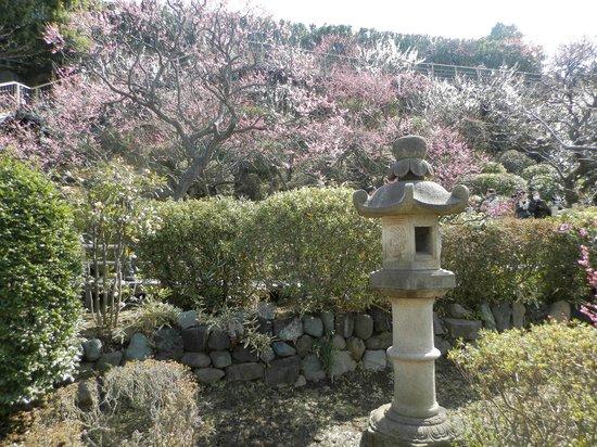 Ikegami Baien:                   池上梅園の写真その3