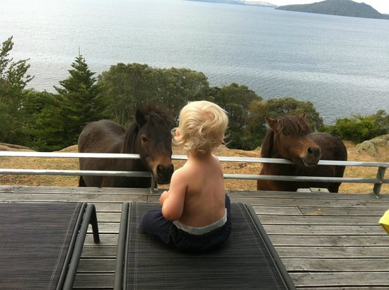 Peppers on the Point - Lake Rotorua:                   Miniature Ponies for company