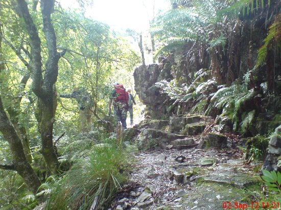 Cape Town Hiking with Tim Lundy -  Tours:                   Magical Afro-montane forest