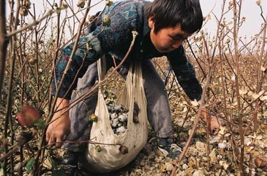 International Slavery Museum:                   Picking cotton today in Usbekistan