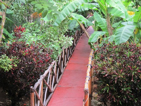 Casa Hamaca Guesthouse:                   Walkway Entrance