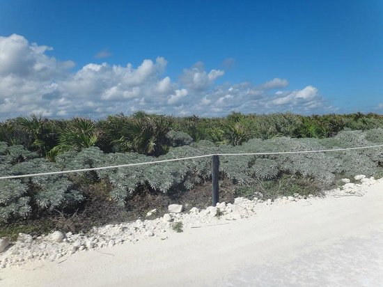 Punta Sur Eco Beach Park:                                     On the other side of road