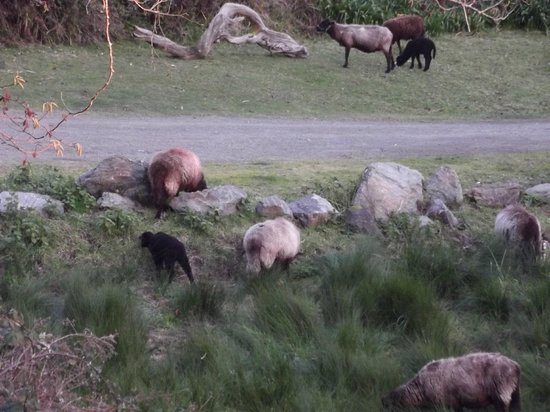 Howard Creek Ranch:                   Some of the local residents
