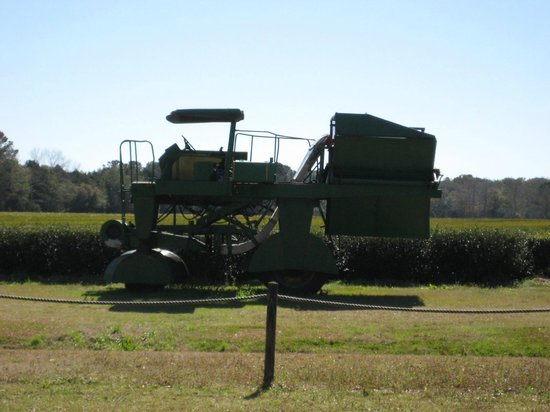 Charleston Tea Plantation:                   Tea Harvester