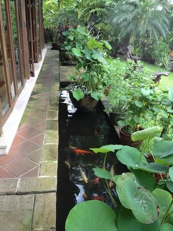 Villa Sarna Ubud:                   fish view from breakfast room