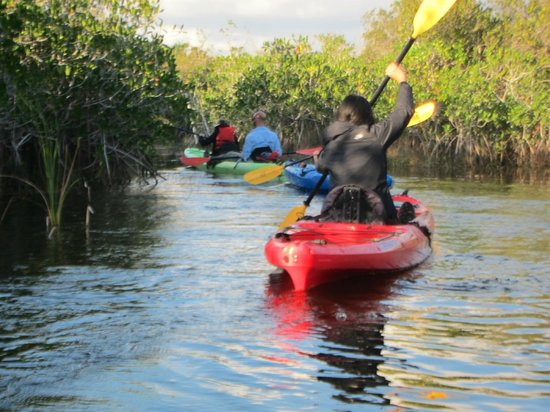 Key West Eco Tours:                   Kayaking through the Mangroves