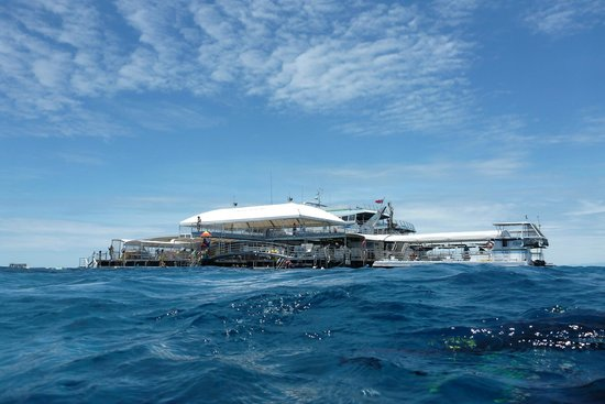 The Quicksilver Pontoon On Agincourt Reef Picture Of